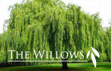 willows-icon (1)